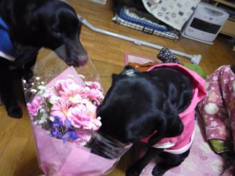 花を食べるクロ