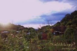 ターシャの庭