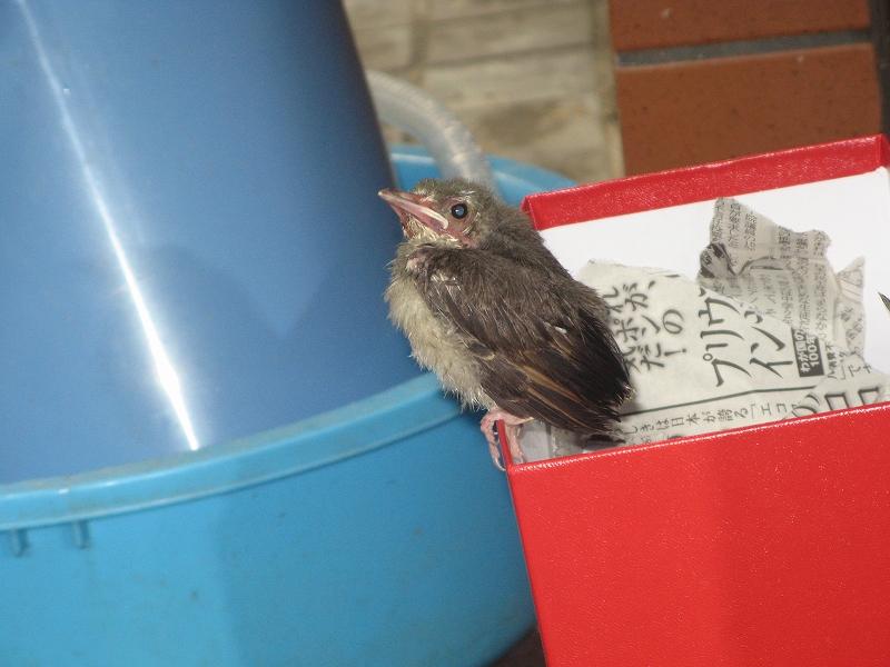 迷い込んだ小鳥