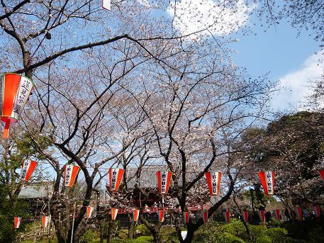 桜並木上野