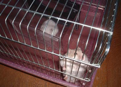 macky 20081117_53