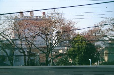 20090327sakura.jpg
