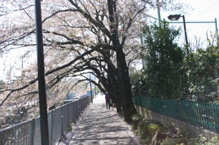 20090410hanaahubuki.jpg