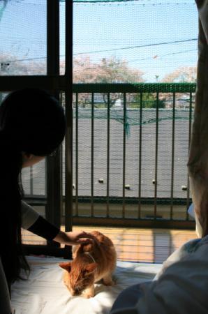 20090410sakura.jpg