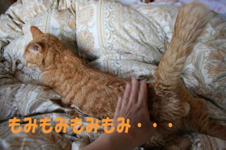 20090522otoyugata.jpg