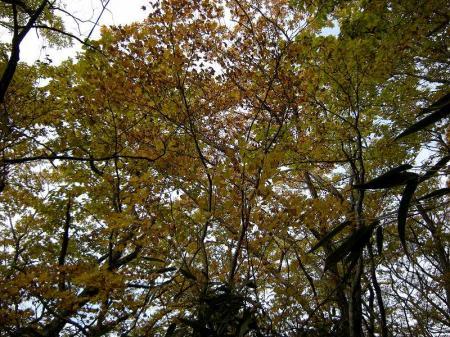 2008.11.2霧立縦走 041