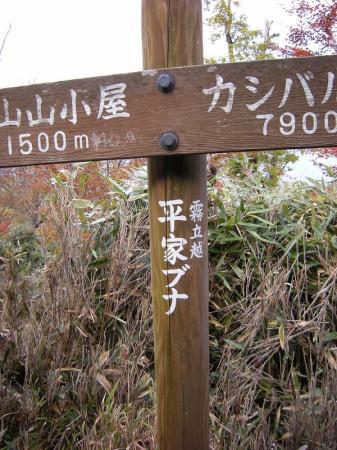 2008.11.2霧立縦走 079