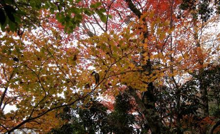 2008.11.2霧立縦走 152
