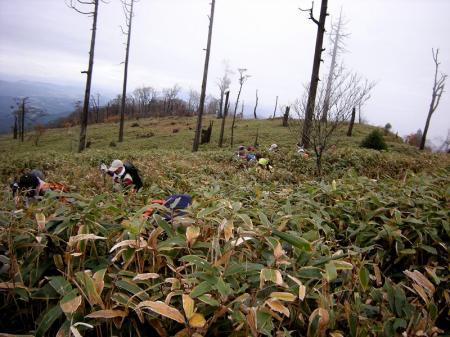 2008.11.9英彦山北西尾根 123