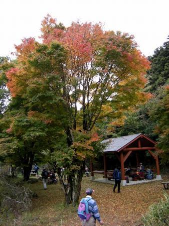 2008.11.9英彦山北西尾根 278