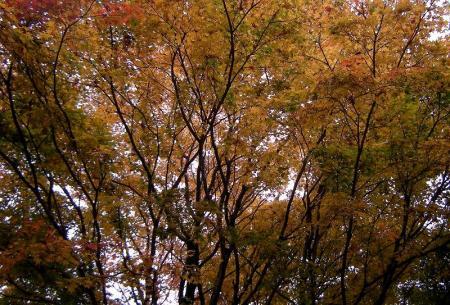 2008.11.9英彦山北西尾根 284
