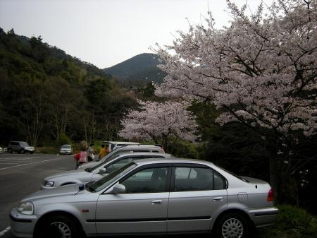 2009.3.29虎尾桜 002