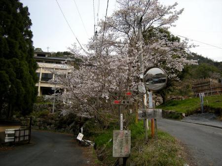 2009.3.29虎尾桜 005