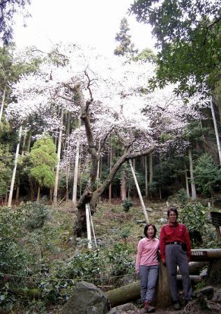 2009.3.29虎尾桜 037