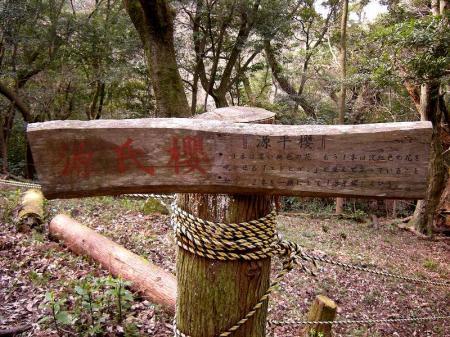 2009.3.29虎尾桜 047