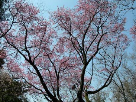 2006.4.8福智山 074