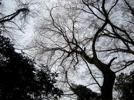 2009.3.29虎尾桜 056