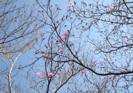 2009.4.11二上山 022