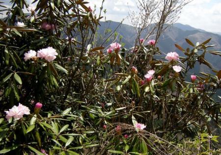 2009.4.11二上山 126