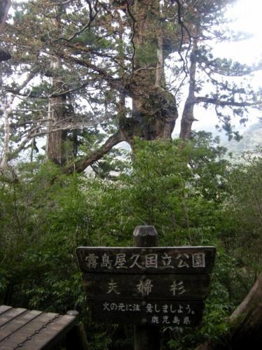 2009.4.25-29屋久島 3005