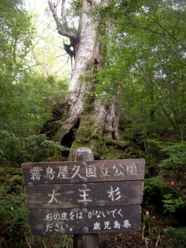 2009.4.25-29屋久島 3006