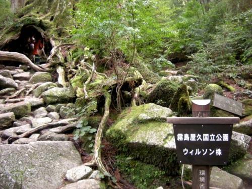 2009.4.25-29屋久島 3010
