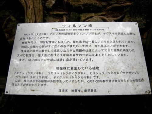 2009.4.25-29屋久島 3011