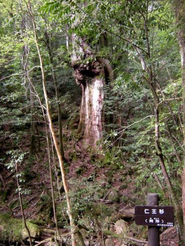 2009.4.25-29屋久島 3019
