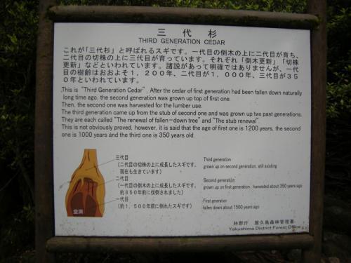 2009.4.25-29屋久島 3023