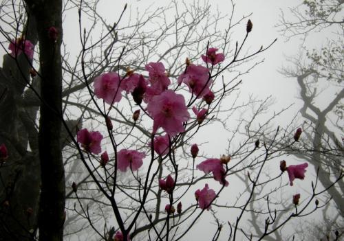 2009.5.4アケボノ4