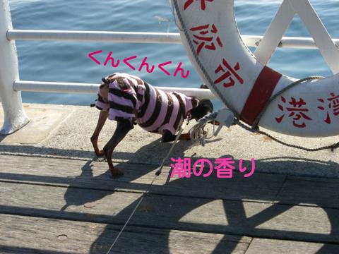maishima04.jpg
