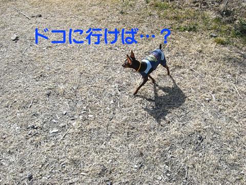 maishima10.jpg