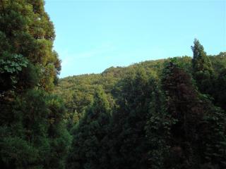 山深い林道