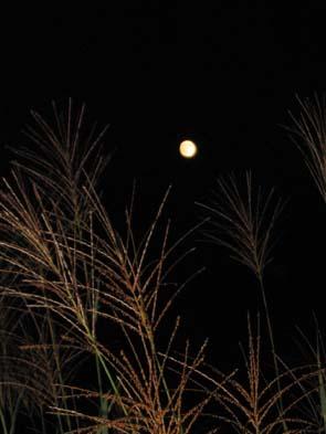 H2009014満月とススキ