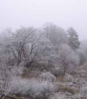 H210303 雪景色
