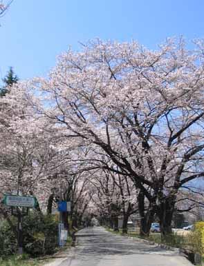H210409桜