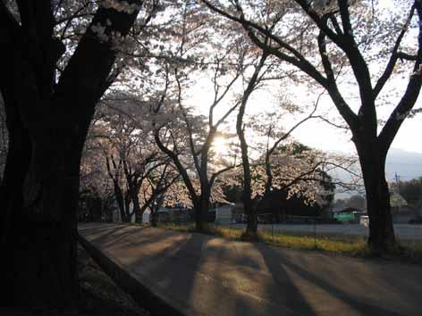 H210410桜