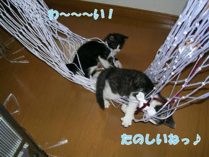 伊藤家の猫 037