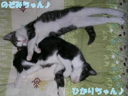 伊藤家の猫 050