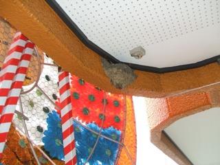 ebsツバメの巣