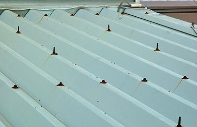 屋根にとまるカメムシ