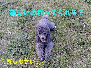 20080326174636.jpg