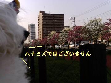 20080422160625.jpg