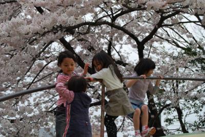 DSC_2253sakura.jpg