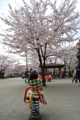 DSC_2270sakurami.jpg