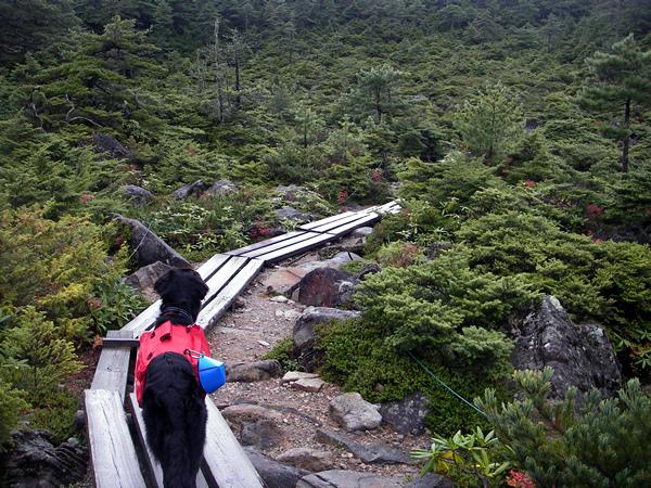北八ケ岳トレック&キャンプ2