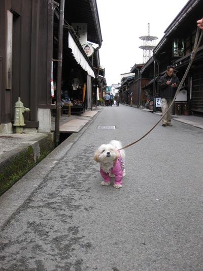 koyuki_20090328205249.jpg