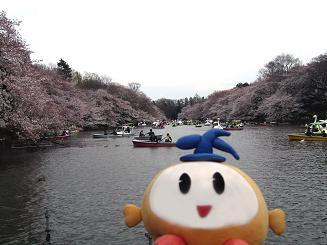 kittan sakura_nanaibashi  blog