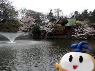 kittan sakura_benzaiten blog