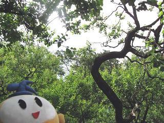 kittan midori1  blog